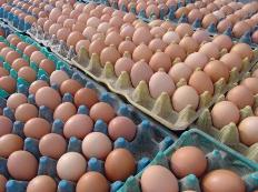 """受春节与去年""""错月""""影响 2月份鸡蛋价格同比涨幅最大"""