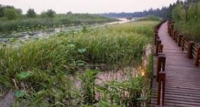 高青一处1422亩生态湿地项目开建