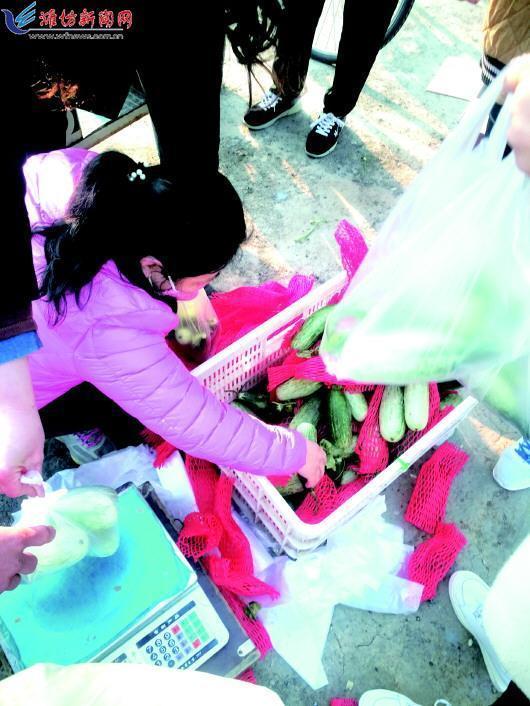 羊角蜜是潍坊集中上市最早的甜瓜 卖出肉价