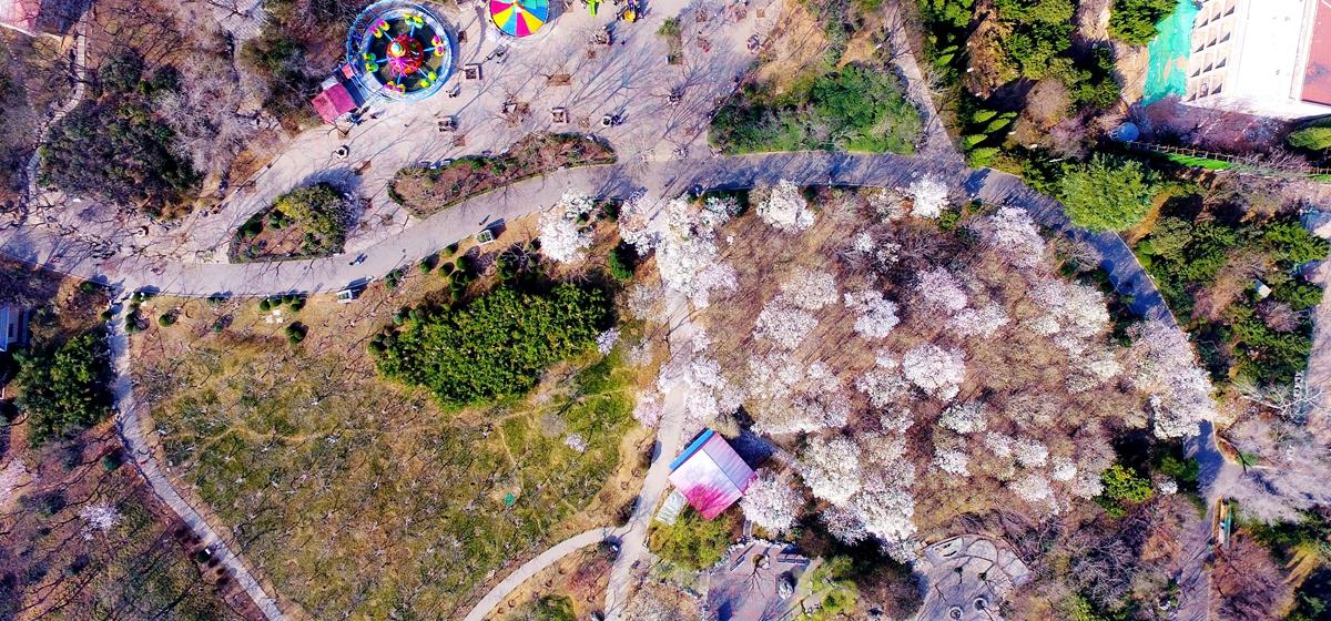 空中寻找济南的春天:花香弥漫植物园,嫩芽吐绿森林公园