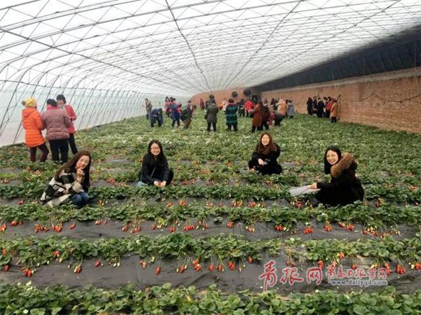 田园草莓采摘.png