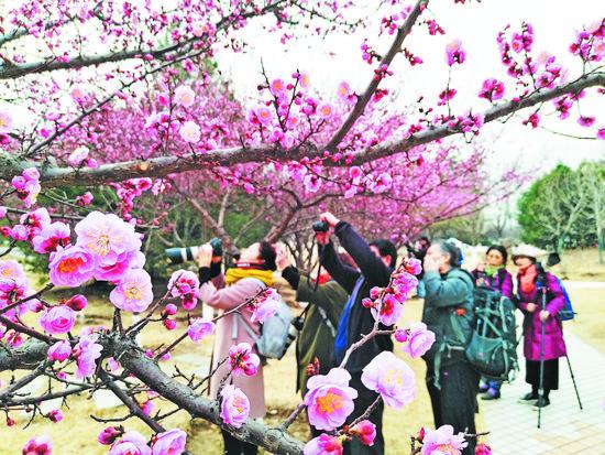 淄博今明风雨送春归 下周后段花更俏