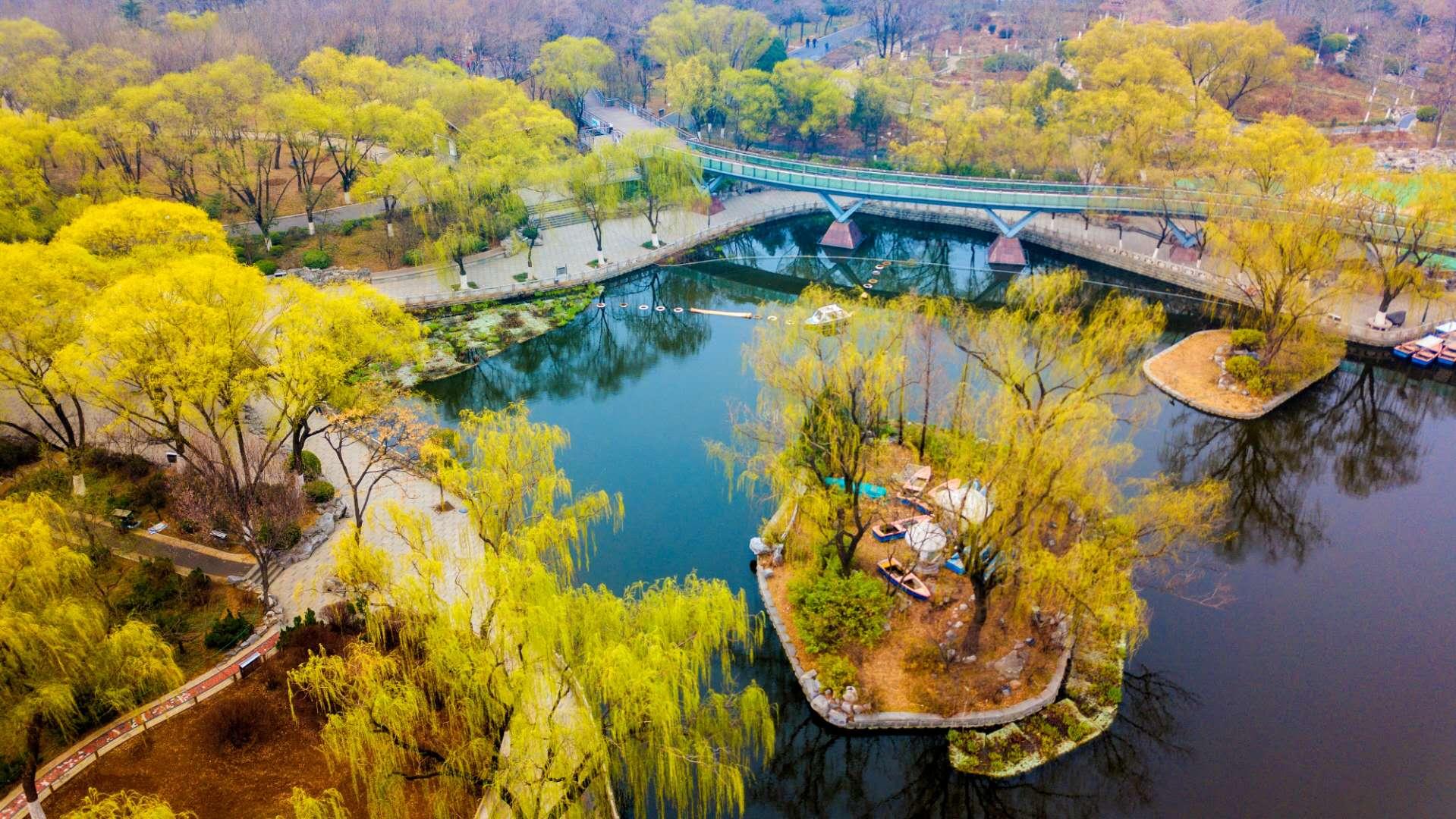 航拍泉城公园绿柳成荫 春色满园入画来