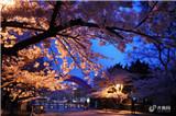 想看一场最美樱花雨,国内这些地方就可以