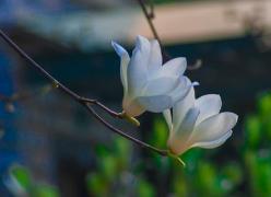 今日迎春分 冷空气影响结束气温今起回升