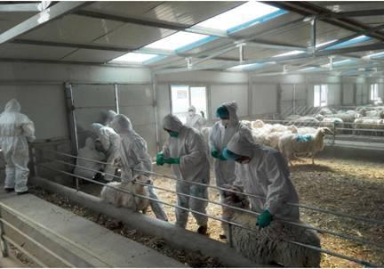 山东省公布首批省级牛羊布病净化场 临清一企业入选
