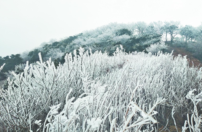 鲁山草木丛林间再现迷人雾凇美景