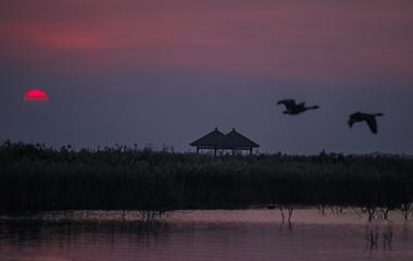 鸟类的国际机场:黄河三角洲湿地