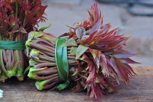 香椿好吃营养高春季吃正当时 有消火解毒功效