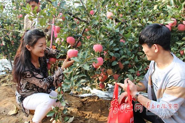 """苹果放心种 青岛这个地方为种植户上""""三保险"""""""