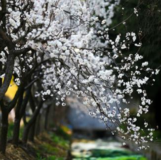 春色满园关不住  莒城风光多姿色