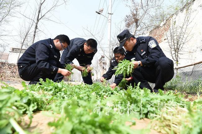 种植3000余株罂粟苗 定陶一男子被刑拘