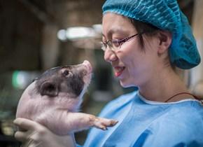 我国诞生世界首例神经疾病基因敲入猪