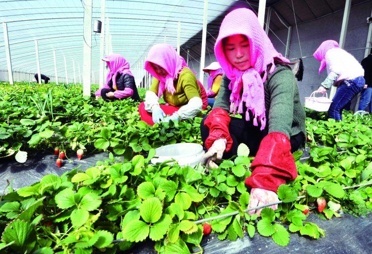 济宁任城区培育农业发展新动能