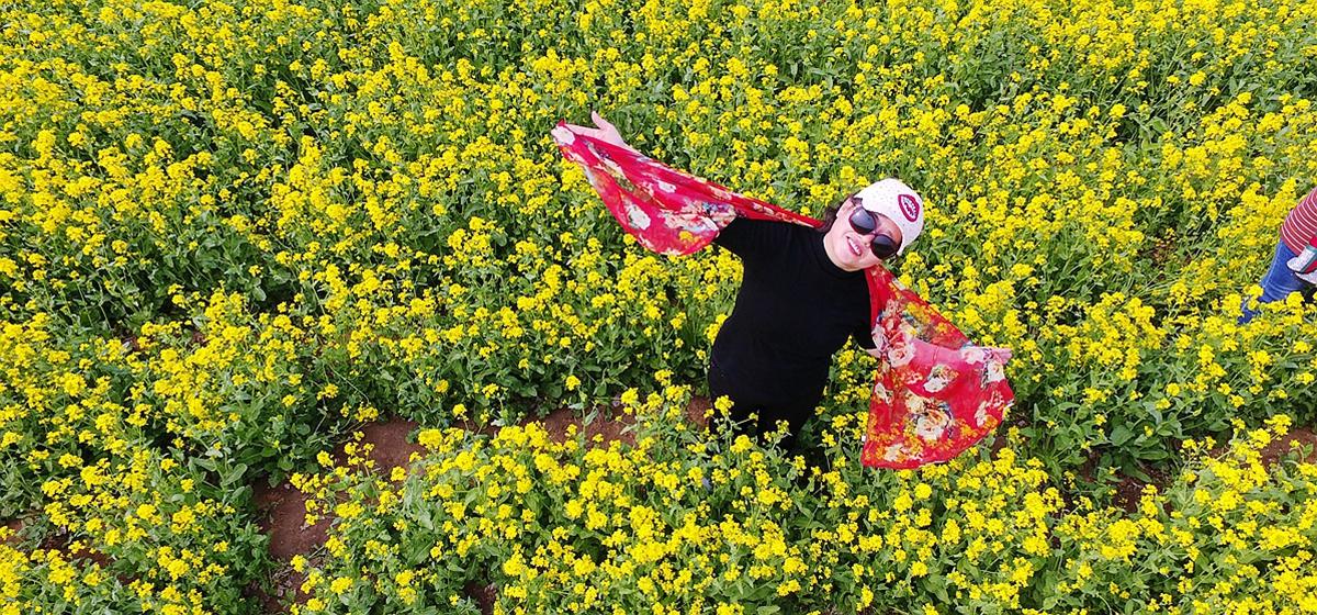 飞吧山东丨满屏都是花香!济南百亩油菜花美醉了