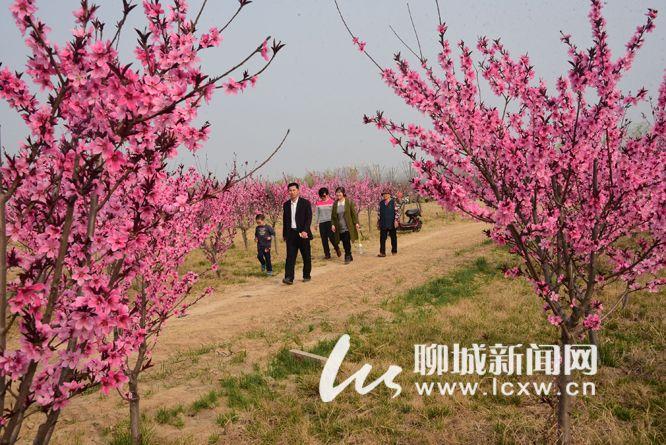 茌平:百花争艳茌山下 春色欲滴金牛湖