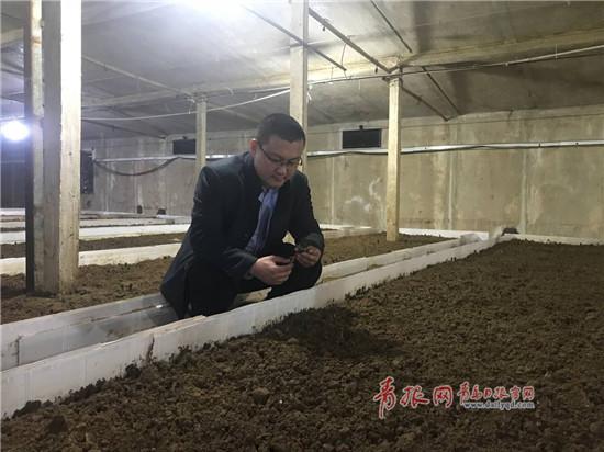 青岛养鸡户转型种珍稀食用菌,收入增了一百万!