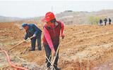 林菜套种发展育苗基地 今春淄博新建万余亩经济林