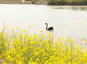 53秒丨草木勃发鸟嬉戏  这样美的双龙湖湿地还不快看看