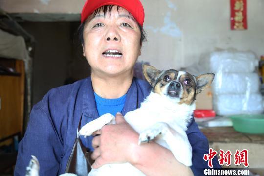 西宁六旬老人坚持十几年收养流浪动物