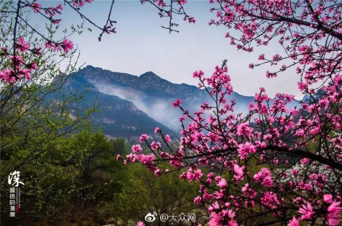 春日芳华看山东丨泰山桃花峪