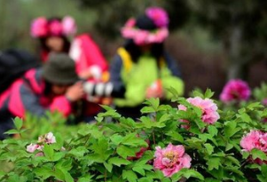第27届菏泽牡丹节明天正式开幕 80多项活动等你来!