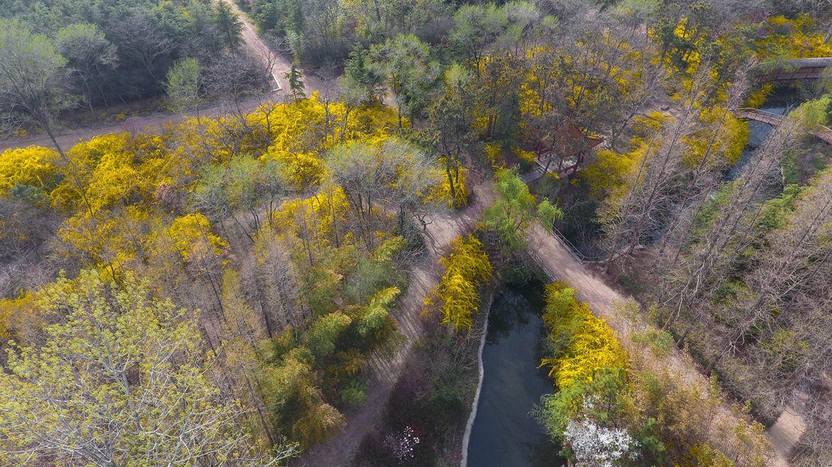 航拍日照森林公园春色 百花盛开美如画