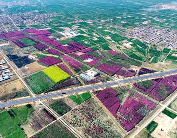 海棠花开醉美滨州!经济技术开发区里则北美海棠惊艳盛开