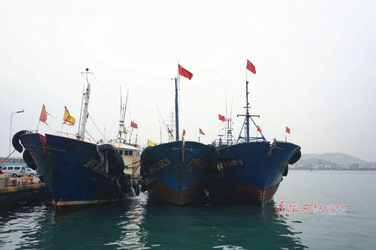 青岛女婿们注意:沙子口码头鲅鱼新鲜上市啦(组图)
