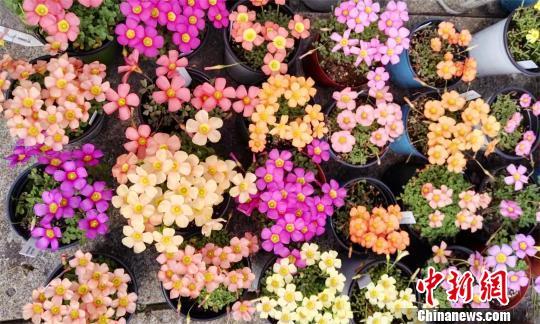 """武汉一高校大学生种花400余种 打造""""屋顶花园"""""""
