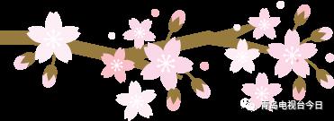 谁说樱花只能白天欣赏 中山公园夜樱一样美哭你!