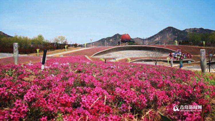 组图:世博园赏花季来啦 门票30元可免费领风筝