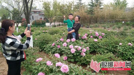 园博园40余种牡丹初露芬芳 周末起临沂市民可观赏