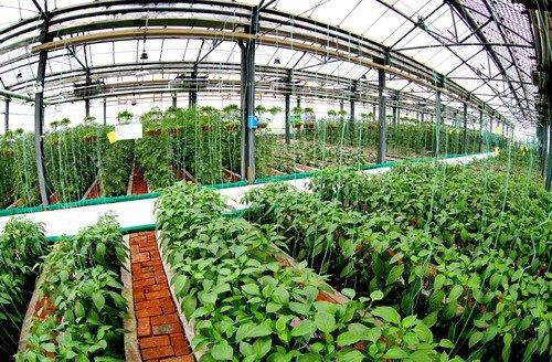 聊城瞄准绿色风向标 推动生态特色农业持续发展