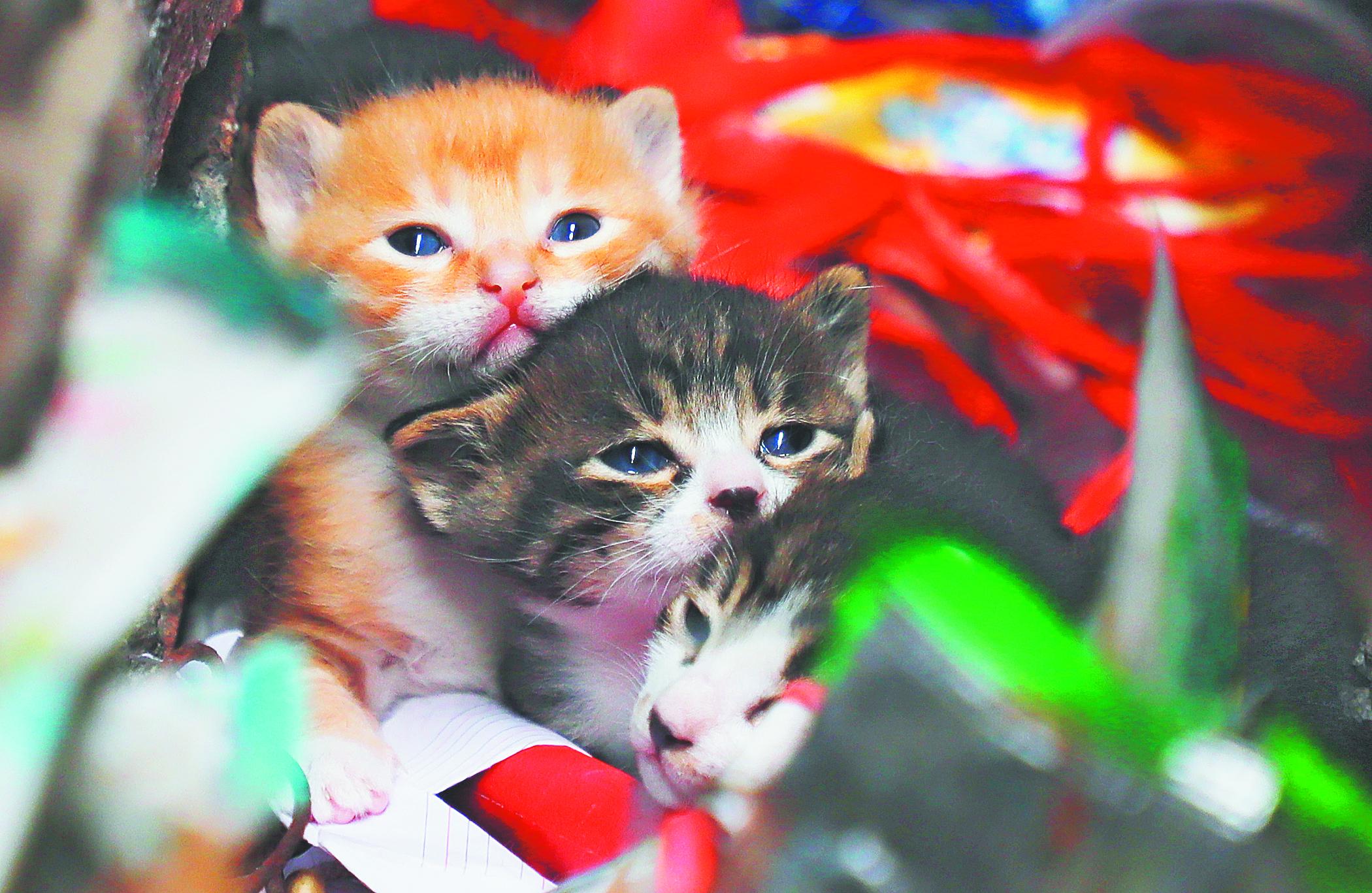 张店一学校出走猫妈妈与小猫团聚
