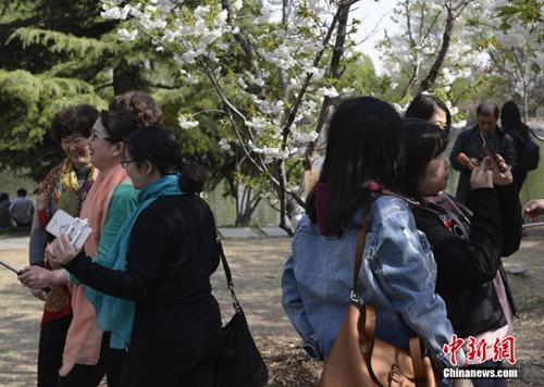 不负春天好时光:北京踏青赏花可以去这些地方