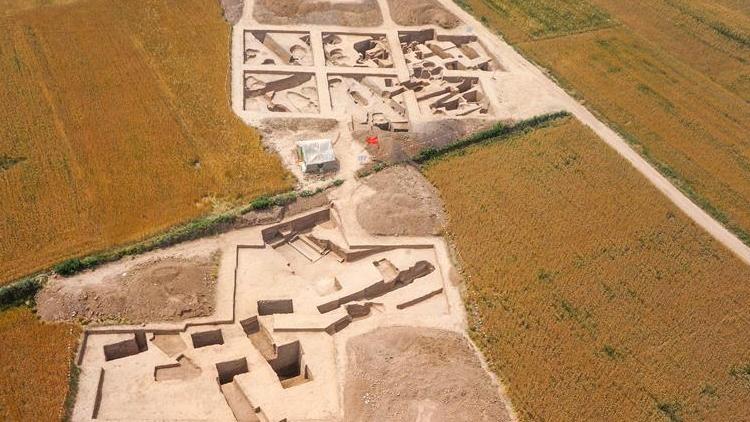 陕西发现5800多年前北方水稻栽培证据