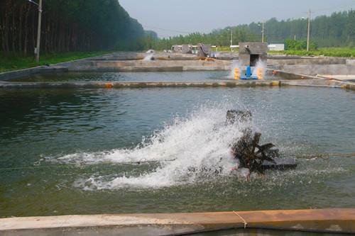 """聊城市水产业品牌效益""""双飞跃""""去年实现总产值42.39亿元"""
