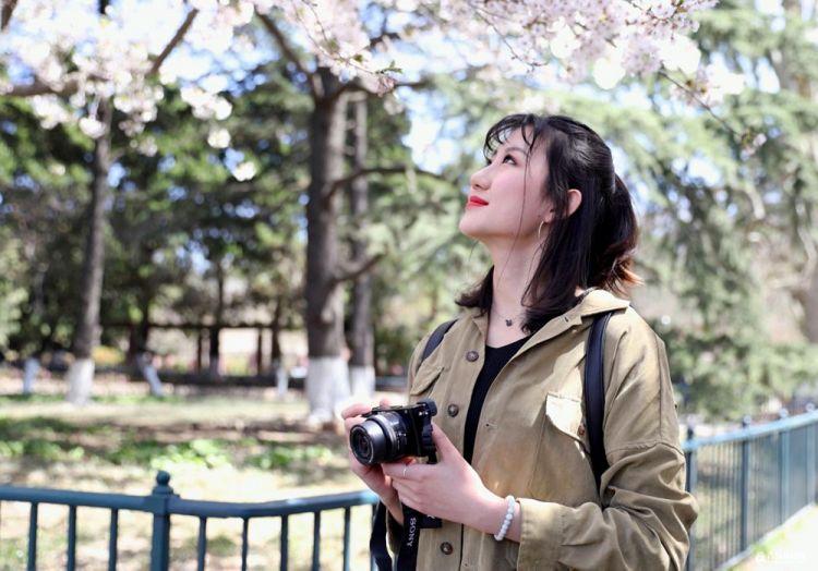 高清:中山公园清晨六点半 属于你一个人的樱花时刻