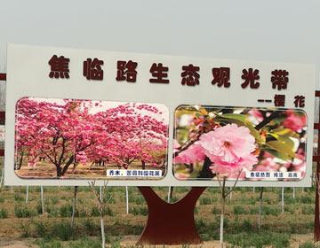 """樱花走廊、紫薇大道…… 邹平造林造景""""两不误"""""""