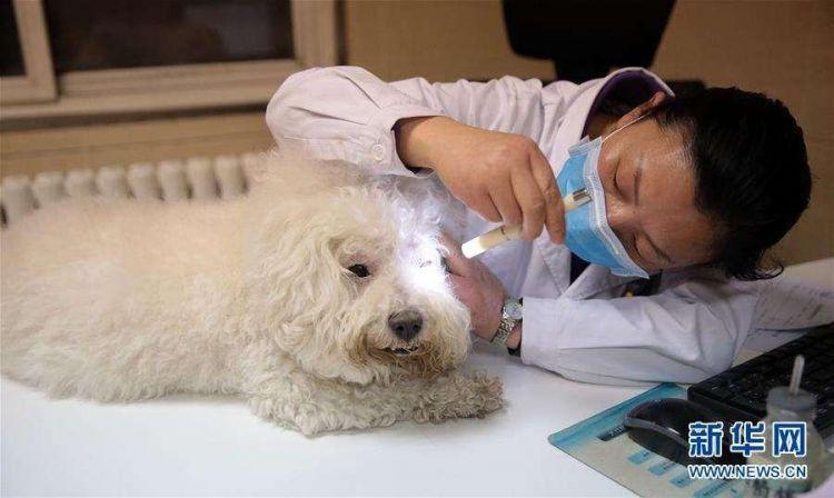 看病动辄几千元 这些宠物医院为何能任性收费?
