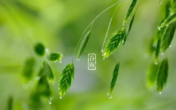 今日谷雨丨雨生百谷夏将至
