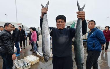 青岛开春捕鱼满舱 海鲜日上岸近10万斤