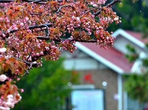 春雨中的青岛美炸了 看完这些照片你的心一定被浇酥