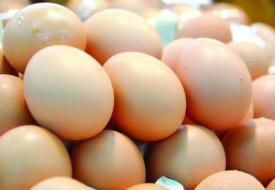 饲料价格上涨 淄博市场蛋价升至每斤4元