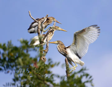 """著名鸟类专家""""卧底""""小开河2年 发现新纪录鸟类22种"""