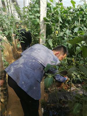 聊城开展今年第一次蔬菜质量安全监督抽查工作