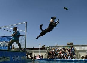 美国举办狗狗跳水比赛 这姿势你打几分?