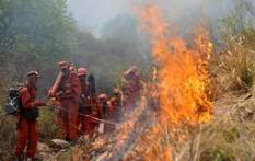 淄博市林业局116个巡查小组严控野外火源