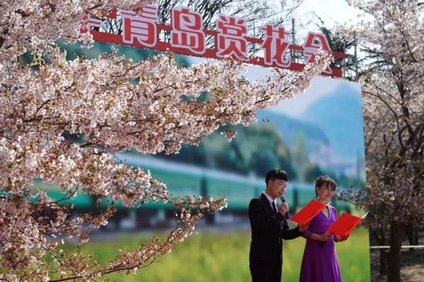 青岛赏花会推出十大赏花景点 市南三条经典赏花路线公布